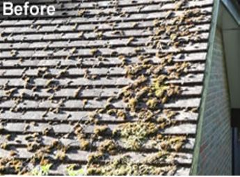 http://www.allingtonroofing.co.uk/index.php/moss-removal-maidstone-kent-me15/