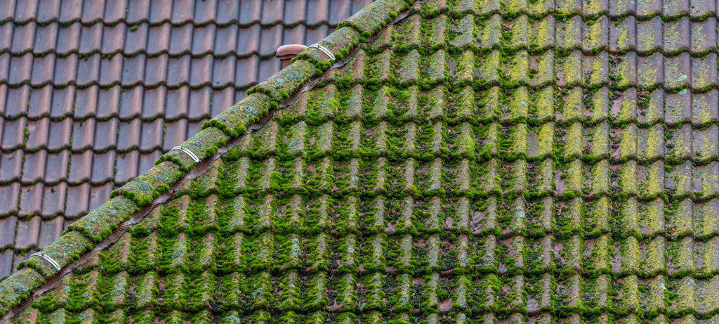 Roof-Moss-Removeal-Contractors-Maidstone-Kent-Near-Me-.png