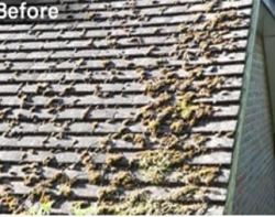 Moss-Removal-Roof-Contractors-Maidstone-Kent.jpg